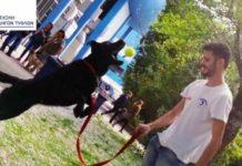 Από φόλα στον Μαραθώνα πέθανε τελικά ο εκπαιδευμένος σκύλος – οδηγός τυφλού ατόμου