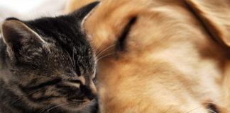 Νέος νόμος για αδέσποτα και κατοικίδια ζώα - Τέλη και κυρώσεις