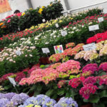 Festival Λουλουδιών στον Μαραθώνα!