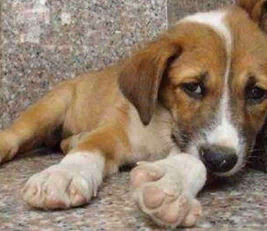 Φιλόζωοι: Πώς το νέο νομοσχέδιο ζώων αυξάνει τα αδέσποτα