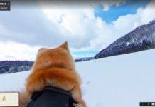 «Dog View»: Ξενάγηση στη πόλη μέσα από τα μάτια ενός σκύλου