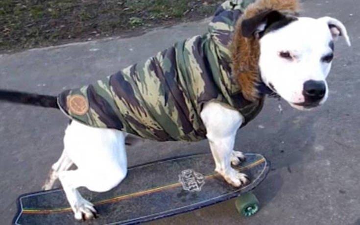 Ο... πολυτάλαντος σκύλος που έγινε viral