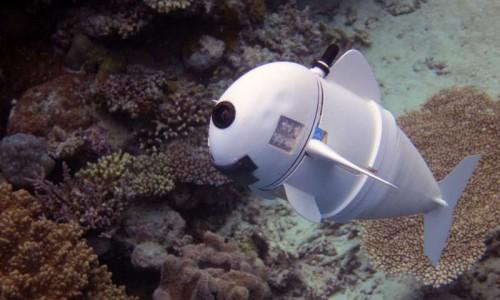 SoFi: Το ρομποτικό ψάρι που ίσως σώσει τους ωκεανούς