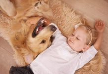 Πώς οι σκύλοι-βοηθοί αλλάζουν ζωές παιδιών με αναπηρία