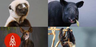9 από τα πιο σπάνια ζώα του κόσμου παλεύουν να επιβιώσουν