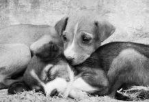 Αδέσποτα ζώα: Ποιος έχει την ευθύνη & που πρέπει να απευθυνόμαστε