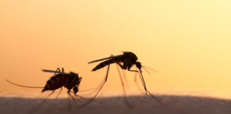 Οι βροχές φέρνουν κουνούπια - Νέοι ψεκασμοί κατά των κουνουπιών