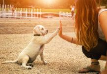 Οι σκύλοι υπακούν περισσότερο τις γυναίκες