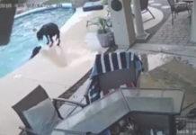 Σκύλος-ήρωας έσωσε τον φίλο του σκύλο από πνιγμό