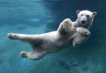 Τα πρώτα ζώα της Γης προκάλεσαν κλιματική αλλαγή